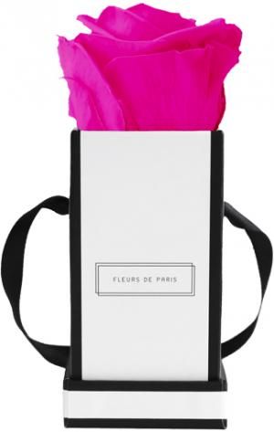 Infinity Collection Hot Pink Mini white - square